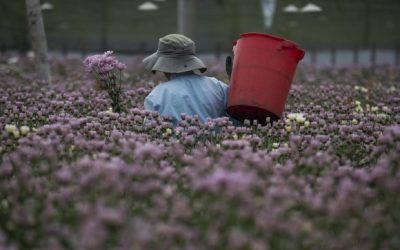 Pocas flores para celebrar el Día de Madres