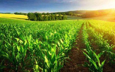 Pistas de cómo sería el agro postpandemia